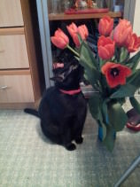 Suzy and Tulips