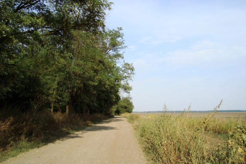 forest-road1