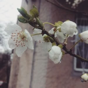 Spring, is that you?
