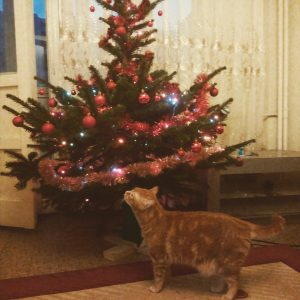 Marlanu and the Christmas tree