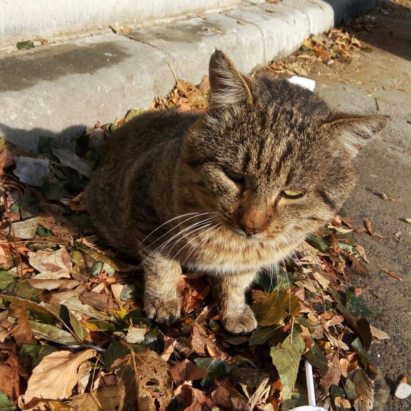 cat sleeping on fallen leaves